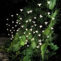 Branches lumineuses LED