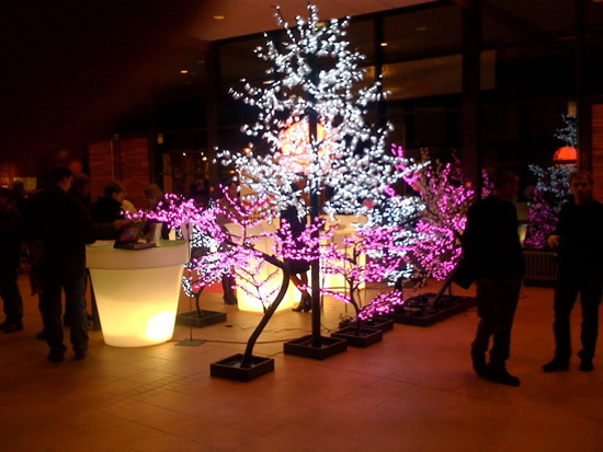 forêt d'arbres lumineux