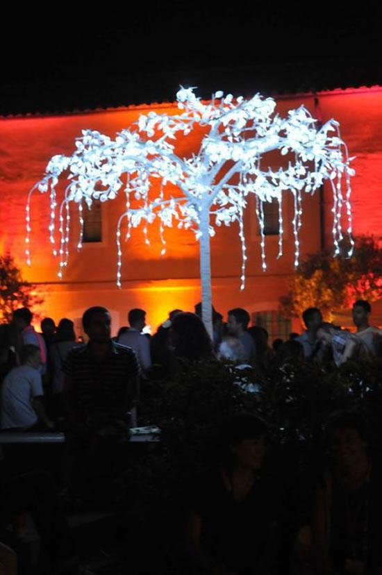 Ficus led lumineux