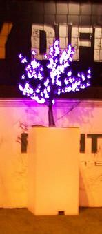 Cerisiers led
