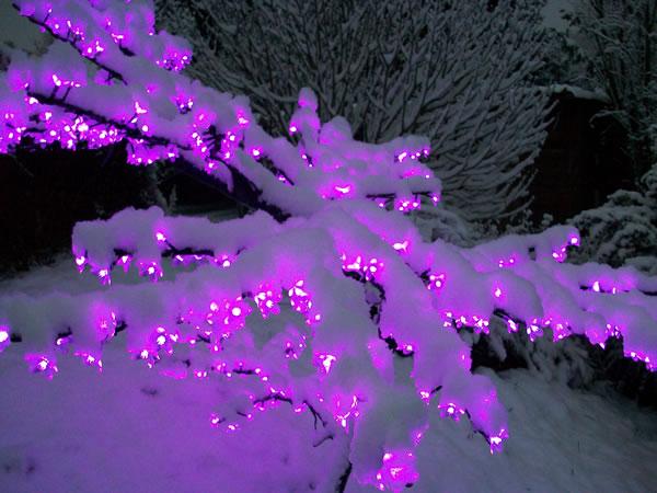 Arbre lumineux sous la neige