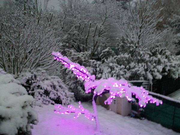 Cerisier lumineux violet