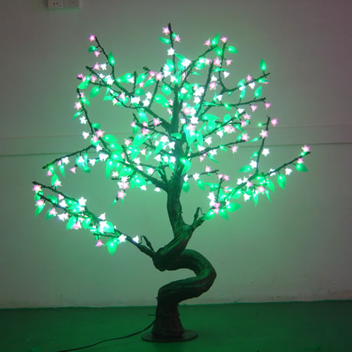 Les bonsaïs arbres zen