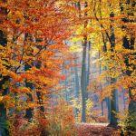 Les bonnes idées de l'automne !