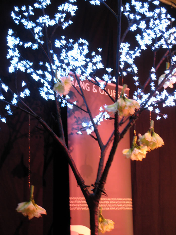 Cerisier lumineux gros plan