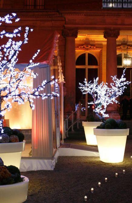 La magie des arbres lumineux