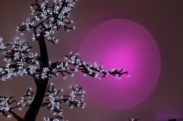 Arbres lumineux : le bonsaï