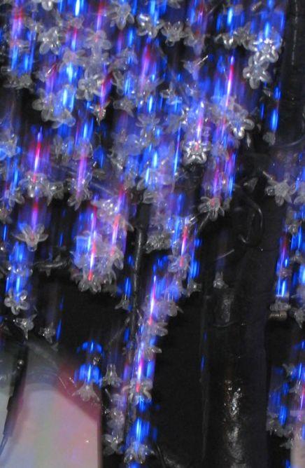 Reflet d'arbre lumineux