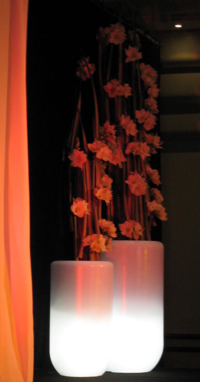 Plantes et fleurs dans nos pots lumineux